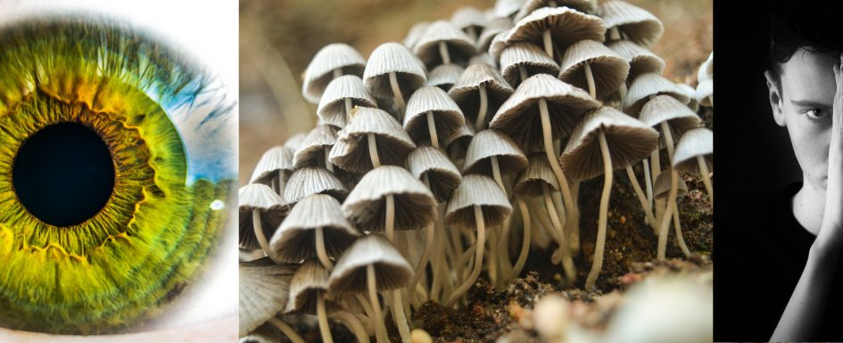 Shrooms A Funny Name Or A Hallucinogen Medicine Or All Of The